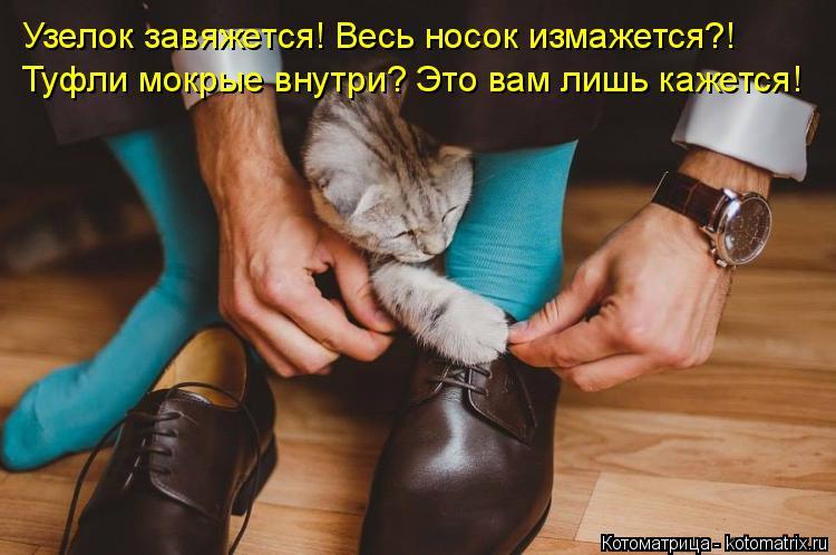 Котоматрица: Узелок завяжется! Весь носок измажется?!  Туфли мокрые внутри? Это вам лишь кажется!