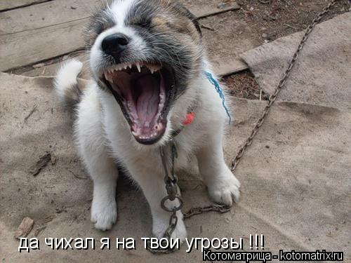 Котоматрица: да чихал я на твои угрозы !!!