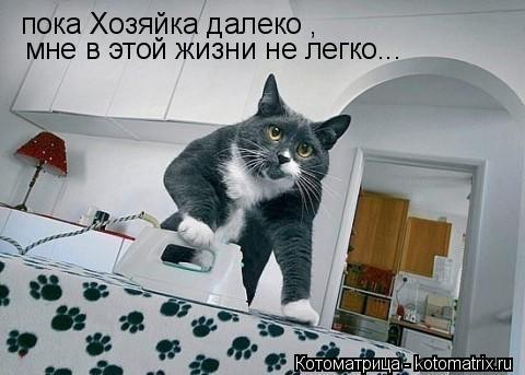 Котоматрица: пока Хозяйка далеко , мне в этой жизни не легко...