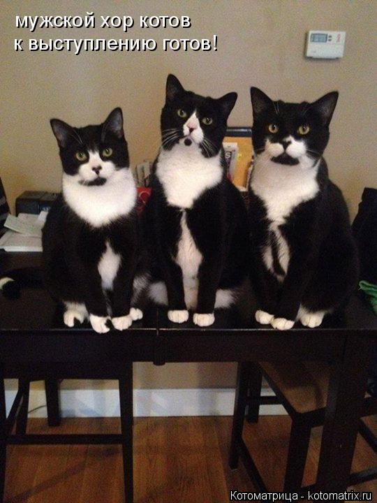 Котоматрица: мужской хор котов к выступлению готов!