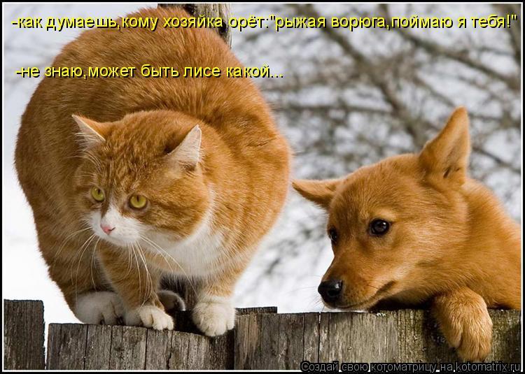 http://kotomatrix.ru/images/lolz/2014/06/02/kotomatritsa_Li.jpg