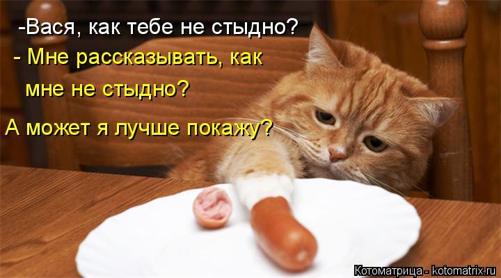 Котоматрица: -Вася, как тебе не стыдно? - Мне рассказывать, как мне не стыдно? А может я лучше покажу?