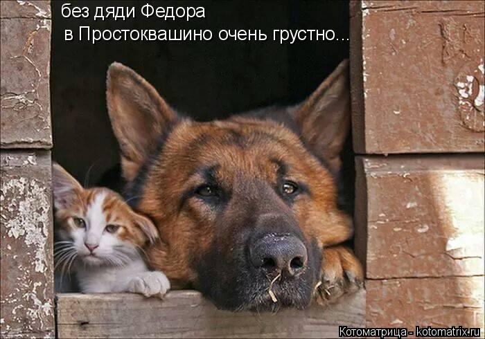 Котоматрица: без дяди Федора  в Простоквашино очень грустно...