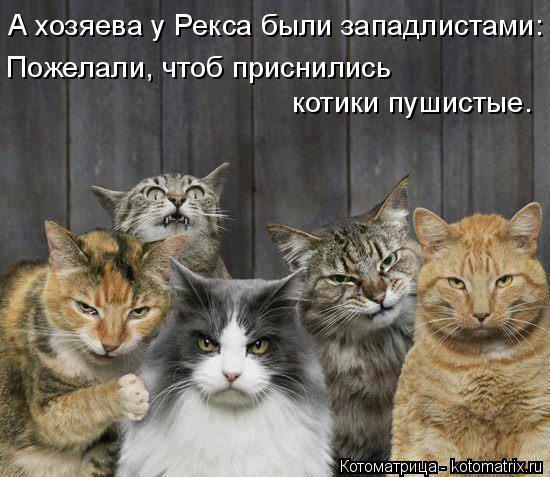 Котоматрица: А хозяева у Рекса были западлистами: Пожелали, чтоб приснились котики пушистые.