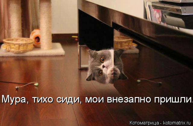 Котоматрица: Мура, тихо сиди, мои внезапно пришли.