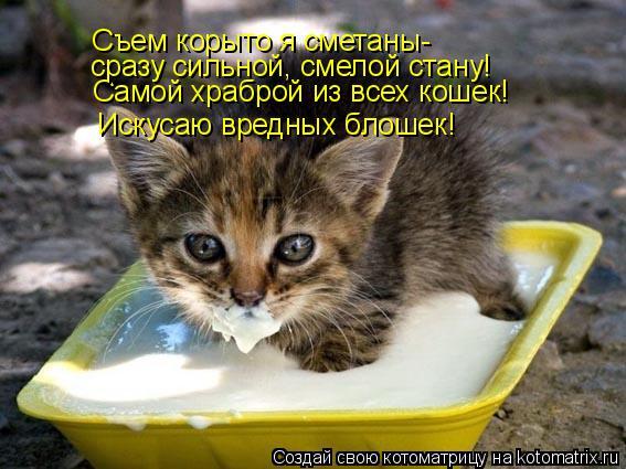 Котоматрица: Самой храброй из всех кошек! Съем корыто я сметаны- сразу сильной, смелой стану! Искусаю вредных блошек!