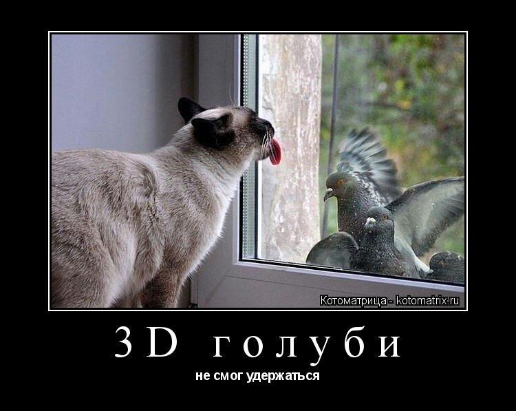 Котоматрица: 3D голуби не смог удержаться