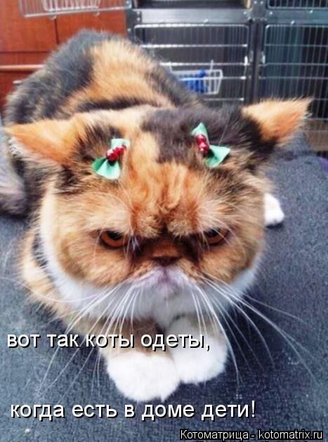 Котоматрица: вот так коты одеты, когда есть в доме дети!