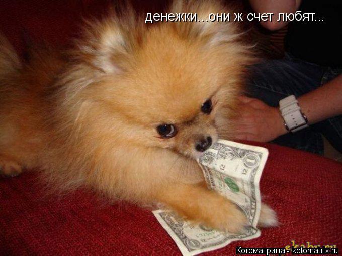Котоматрица: денежки...они ж счет любят...