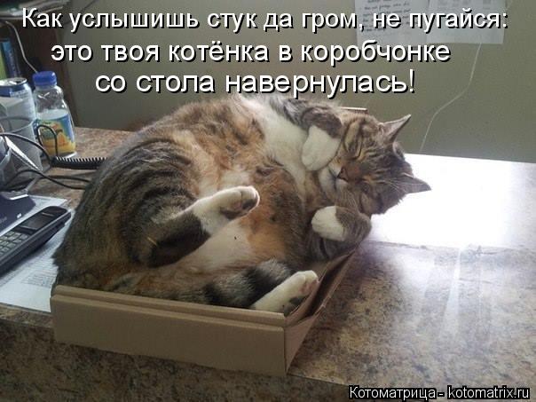 Котоматрица: Как услышишь стук да гром, не пугайся: со стола навернулась! это твоя котёнка в коробчонке