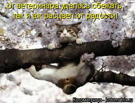 Котоматрица: от ветеринара удалось сбежать, так я аж расцвел от радости!