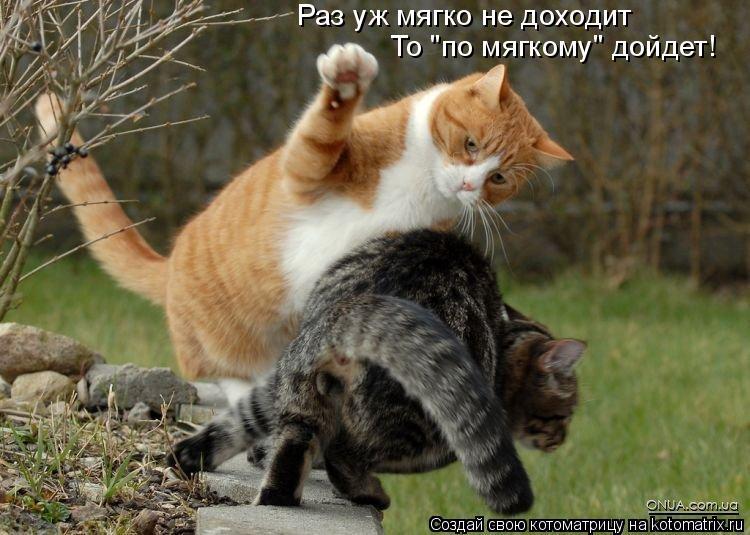 "Котоматрица: Раз уж мягко не доходит То ""по мягкому"" дойдет!"