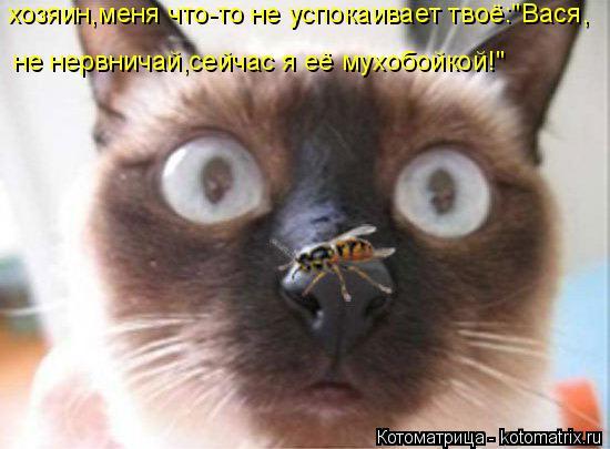 """Котоматрица: хозяин,меня что-то не успокаивает твоё:""""Вася, не нервничай,сейчас я её мухобойкой!"""""""