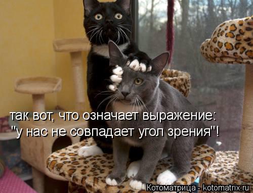 """Котоматрица: так вот, что означает выражение: """"у нас не совпадает угол зрения""""!"""