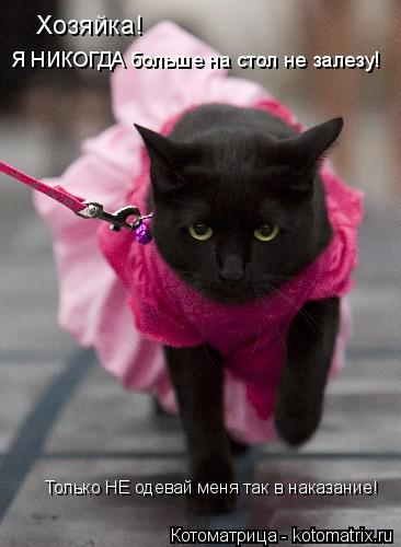 Котоматрица: Хозяйка! Я НИКОГДА больше на стол не залезу! Только НЕ одевай меня так в наказание!