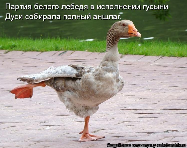 Котоматрица: Партия белого лебедя в исполнении гусыни Дуси собирала полный аншлаг.