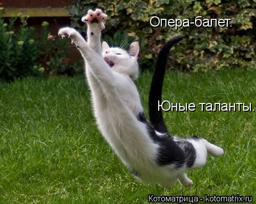 Котоматрица: Опера-балет. Юные таланты.