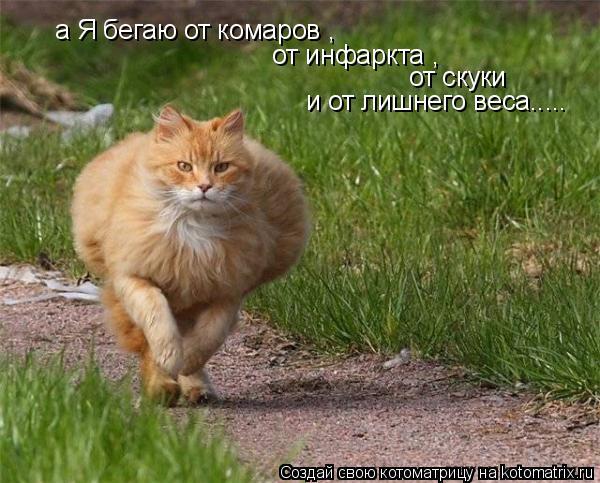 Котоматрица: а Я бегаю от комаров , от инфаркта , от скуки  и от лишнего веса.....