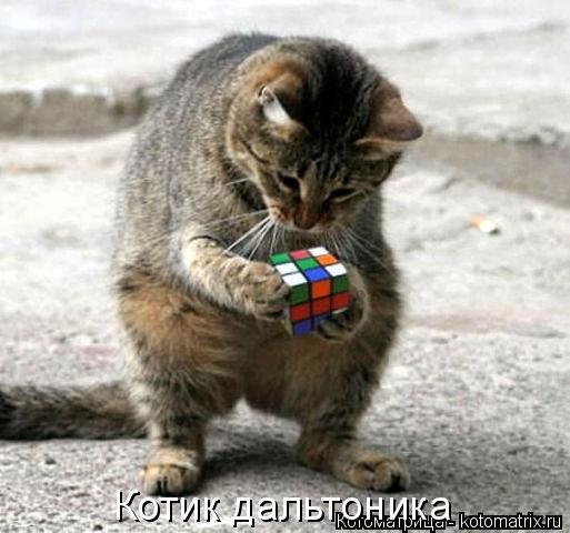 Котоматрица: Котик дальтоника