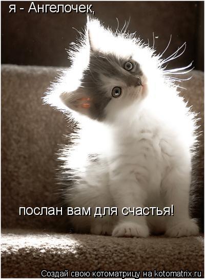 Котоматрица: я - Ангелочек, послан вам для счастья!