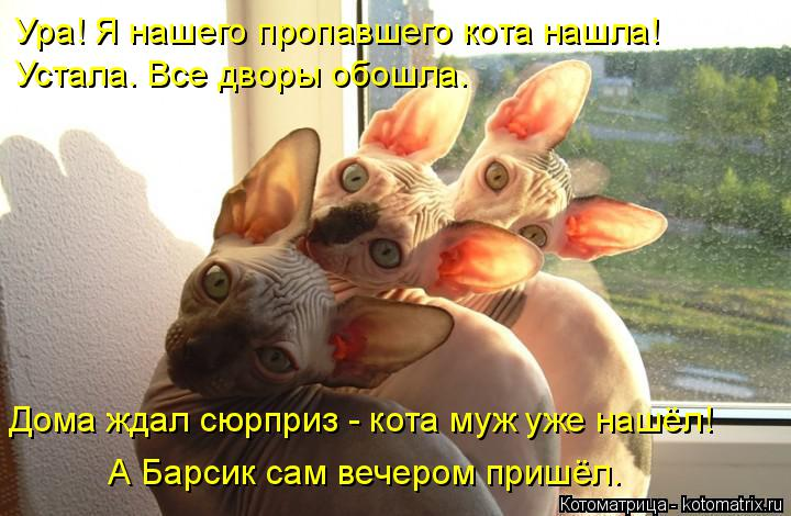 Котоматрица: Ура! Я нашего пропавшего кота нашла!  Устала. Все дворы обошла. Дома ждал сюрприз - кота муж уже нашёл! А Барсик сам вечером пришёл.