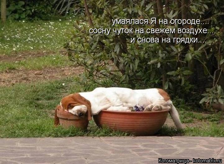 Котоматрица: умаялася Я на огороде.... сосну чуток на свежем воздухе.... и снова на грядки....