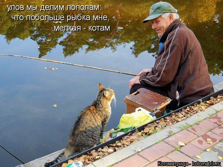 Котоматрица: улов мы делим пополам: что побольше рыбка мне, мелкая - котам