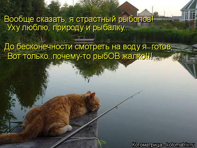 Котоматрица: Вообще сказать, я страстный рыболов! До бесконечности смотреть на воду я  готов, Уху люблю, природу и рыбалку... Вот только..почему-то рыбОВ жа