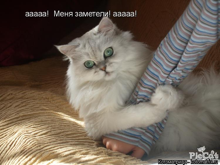 Котоматрица: ааааа!  Меня заметели! ааааа!
