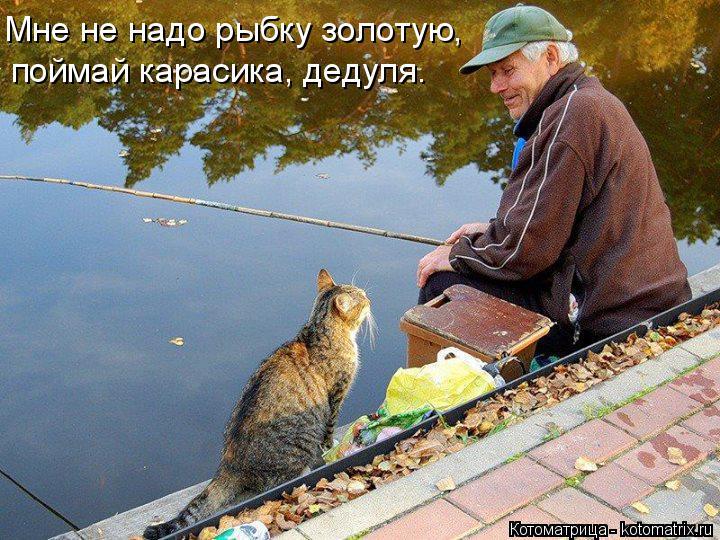 Котоматрица: Мне не надо рыбку золотую, поймай карасика, дедуля.