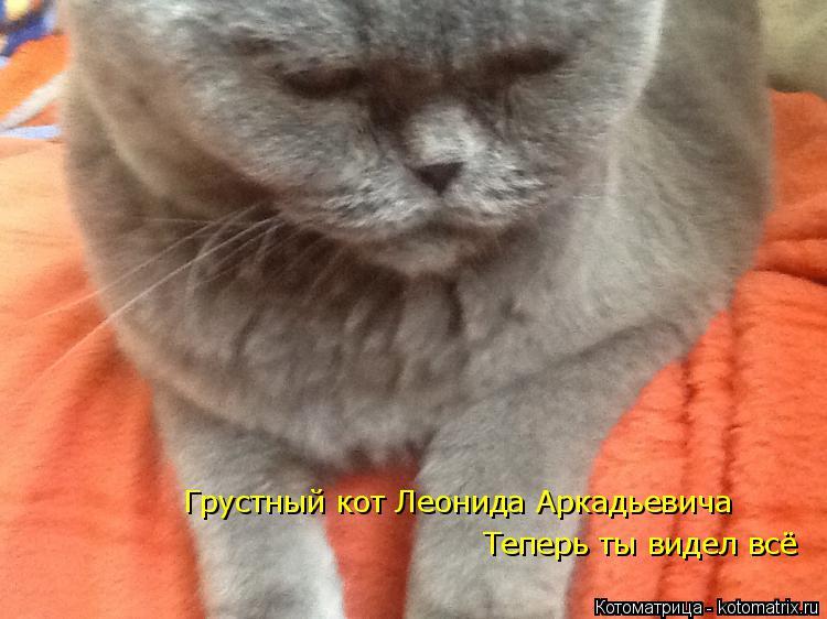 Котоматрица: Грустный кот Леонида Аркадьевича Теперь ты видел всё