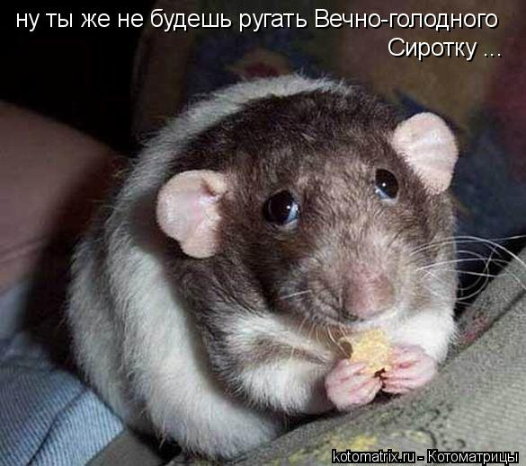 Котоматрица: ну ты же не будешь ругать Вечно-голодного  Сиротку ...