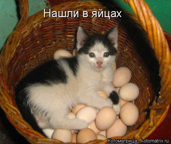 Котоматрица: Нашли в яйцах