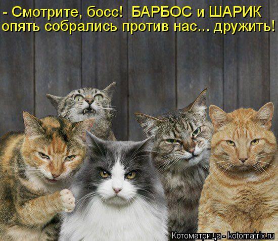 Котоматрица: - Смотрите, босс!  БАРБОС и ШАРИК опять собрались против нас... дружить!