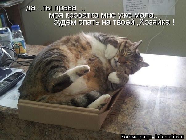 Котоматрица: да...ты права.... моя кроватка мне уже мала.... будем спать на твоей ,Хозяйка !