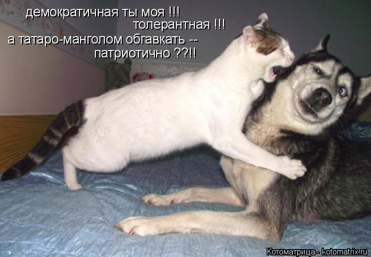 Котоматрица: демократичная ты моя !!! толерантная !!! а татаро-манголом обгавкать -- патриотично ??!!