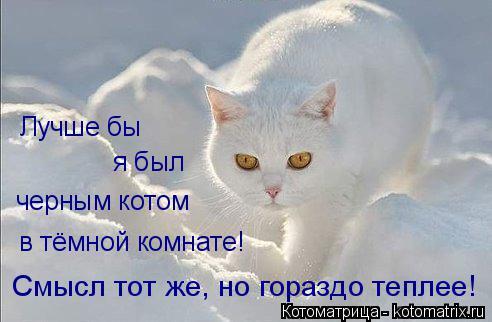 Котоматрица: в тёмной комнате! черным котом Смысл тот же, но гораздо теплее! Лучше бы я был