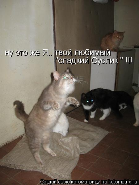 """Котоматрица: ну это же Я...твой любимый  """"сладкий Суслик """" !!!"""