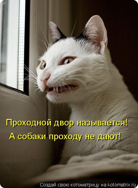 Котоматрица: Проходной двор называется! А собаки проходу не дают!