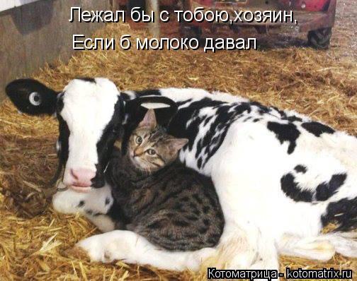 Котоматрица: Лежал бы с тобою,хозяин, Если б молоко давал