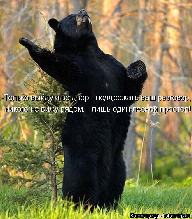 Котоматрица: никого не вижу рядом... лишь один лесной простор! -Только выйду я во двор - поддержать ваш разговор,