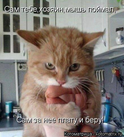 Котоматрица: Сам тебе,хозяин,мышь поймал, Сам за неё плату и беру!
