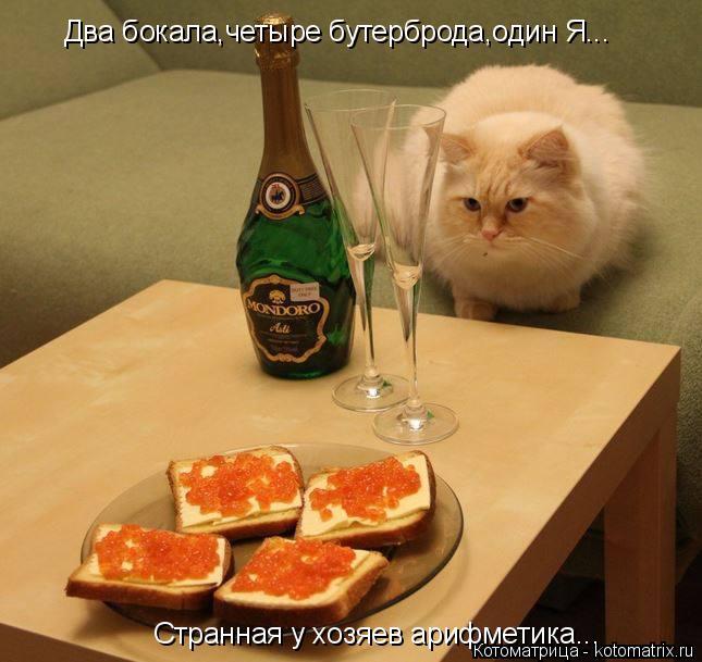 Котоматрица: Два бокала,четыре бутерброда,один Я... Странная у хозяев арифметика...