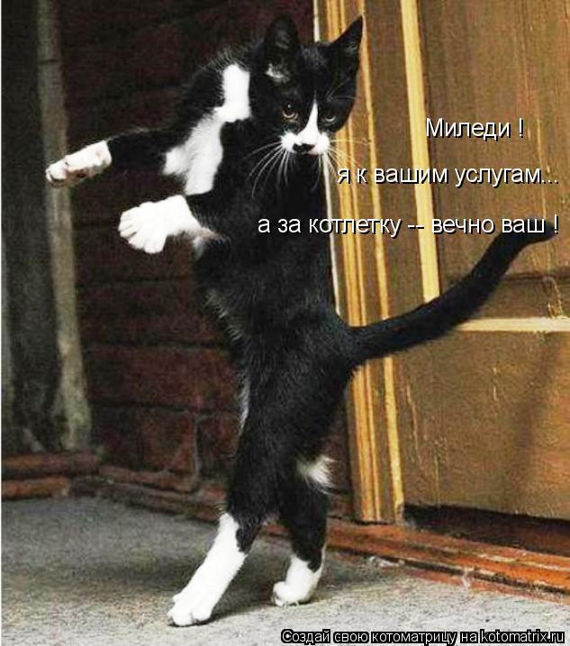 Котоматрица: Миледи ! я к вашим услугам... а за котлетку -- вечно ваш !