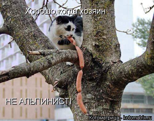 Котоматрица: Хорошо,когда хозяин  НЕ АЛЬПИНИСТ!