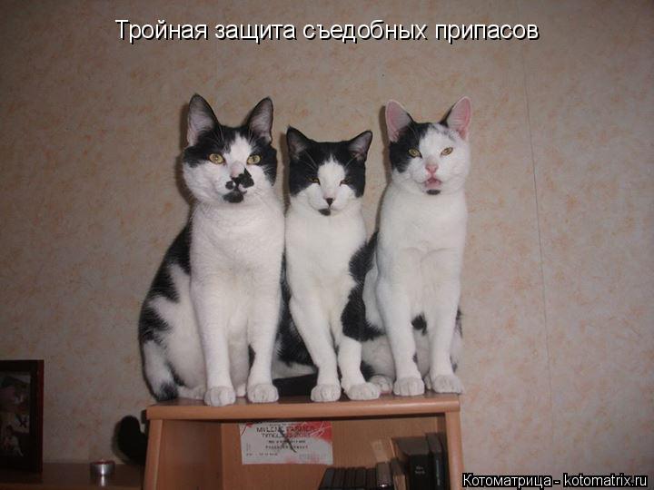 Котоматрица: Тройная защита съедобных припасов
