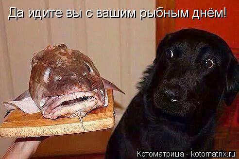 Котоматрица: Да идите вы с вашим рыбным днём!