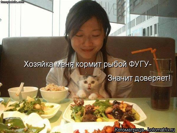 Котоматрица: Хозяйка меня кормит рыбой ФУГУ- Значит доверяет!