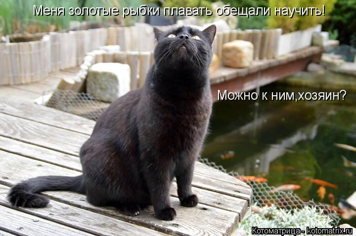 Котоматрица: Меня золотые рыбки плавать обещали научить! Можно к ним,хозяин?