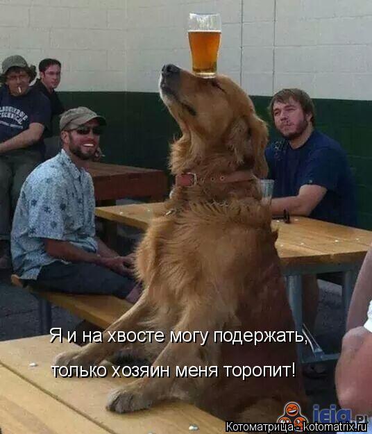 Котоматрица: Я и на хвосте могу подержать, только хозяин меня торопит!